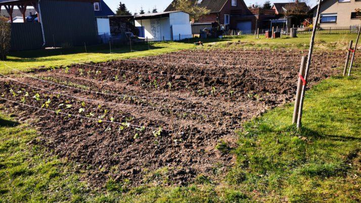 Ackerpflanzung – leider wieder ohne Kinder :-(